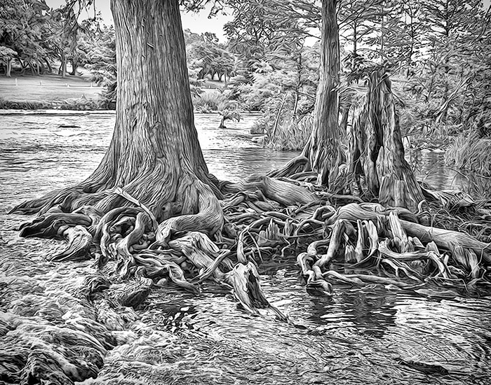 Cypress roots, Blanco River