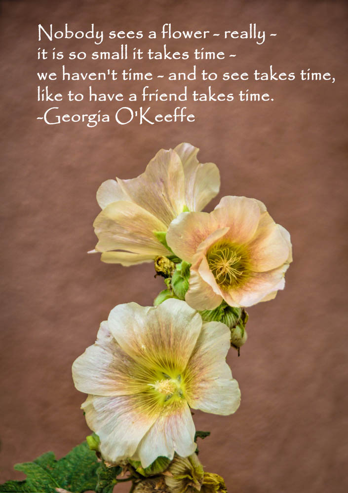 Hollyhocks and adobe with quote