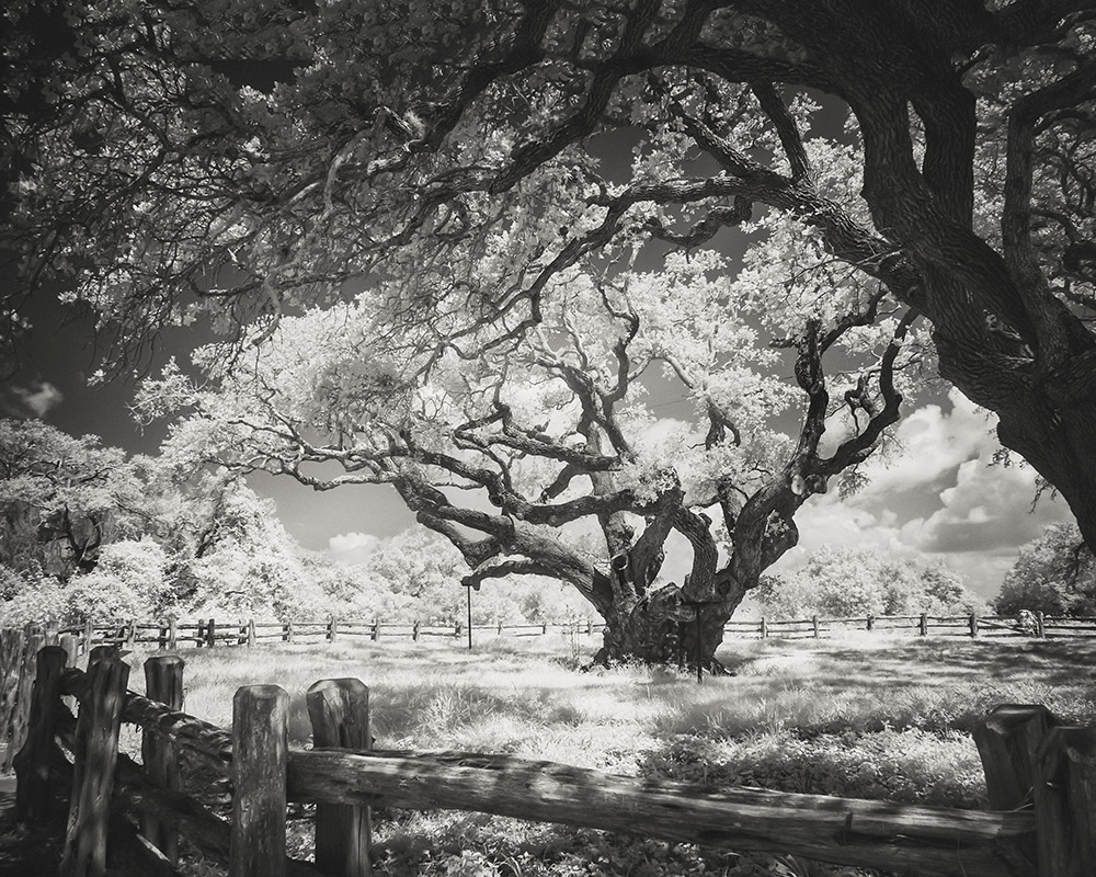 Big-Tree-in-IR-#2